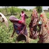 Video collective women farming Ekta Parishad